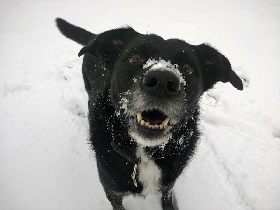 Big Silly snow
